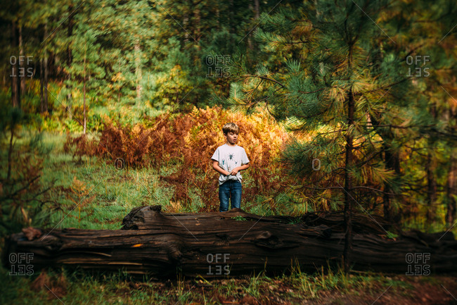 Boy standing behind log in the forest