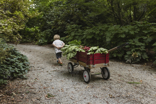 Toddler boy pulling wagon full of home grown vegetables