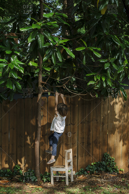 Young girl hanging on branch of tree