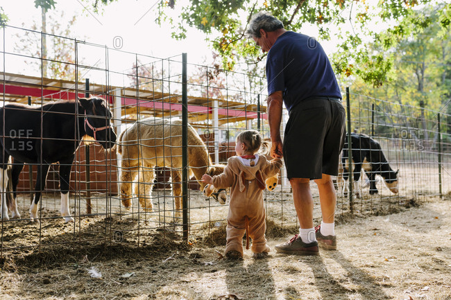 Grandfather and granddaughter looking at farm animals