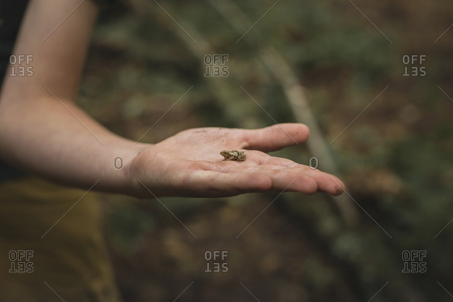 Cropped hand of boy holding small frog at field