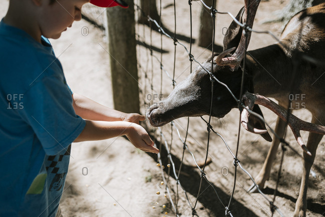 High angle view of boy feeding deer at zoo