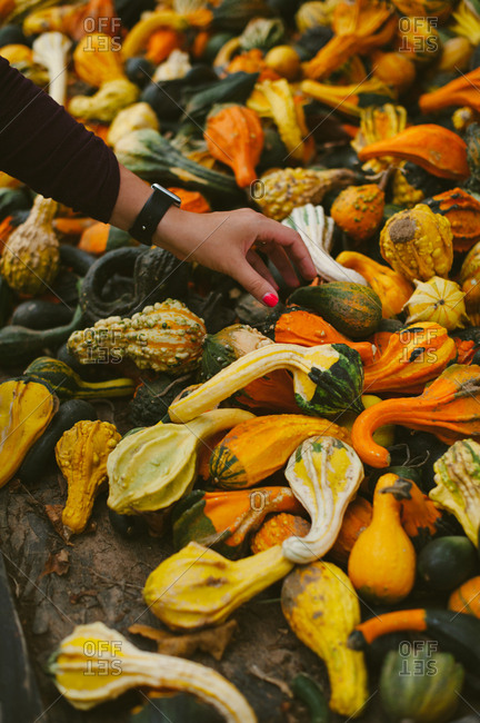 Woman selecting a squash from a pile of gourds