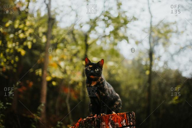 Black and orange cat sitting on a tree stump