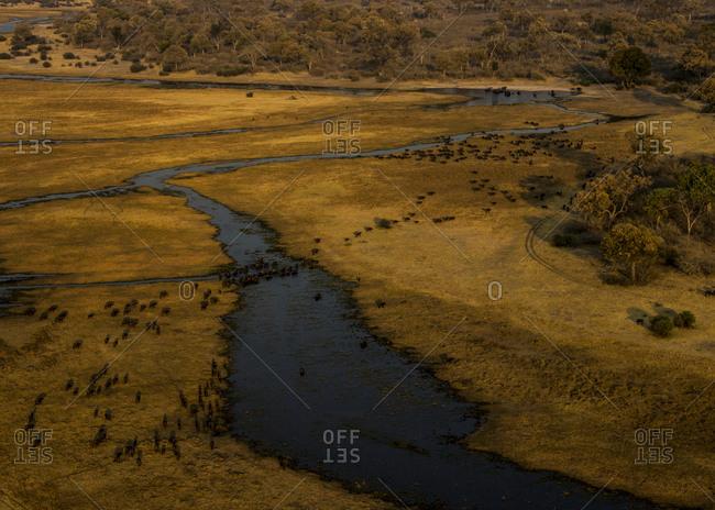A herd of Buffalo, Syncerus caffer, cross a spillway at sunset.