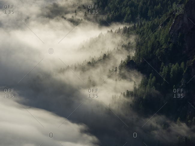 Dense fog in forest in South Tyrol, Italy