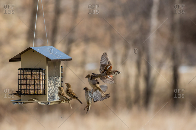 Several birds around a bird feeder