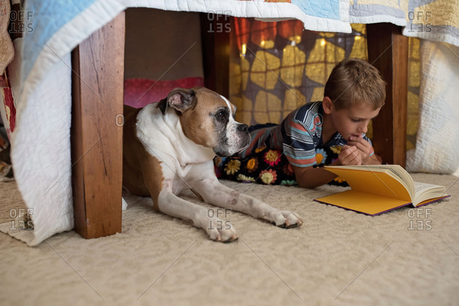 Boxer dog underneath a dining room table