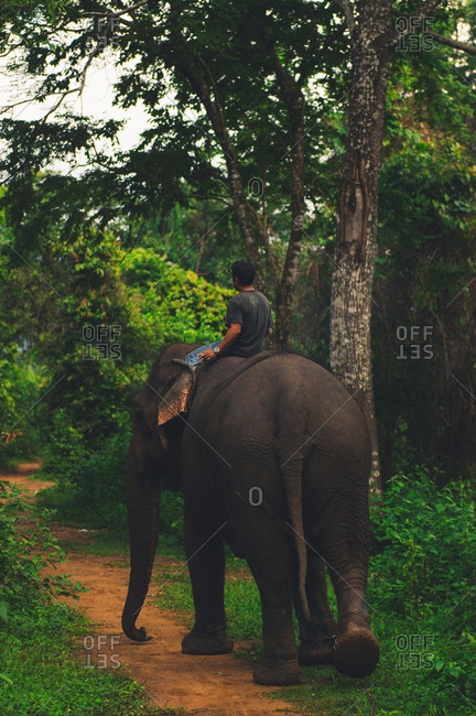 Person riding elephant on trail