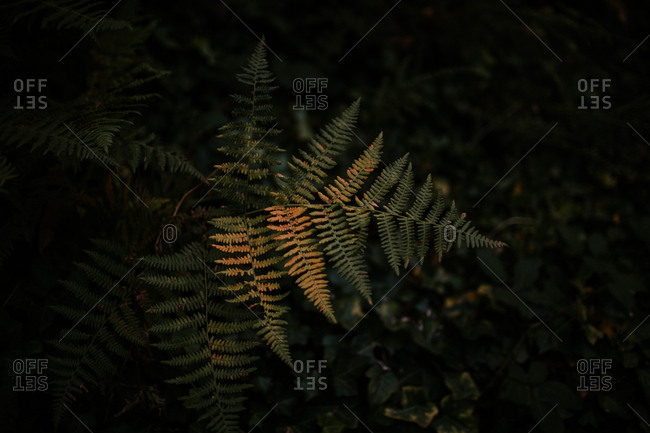 Fern frond in forest