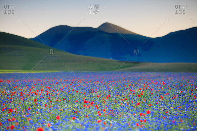 Sunset in Castelluccio di Norcia during flowering, Perugia, Umbria, Italy