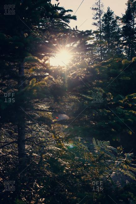 Sun shining through trees - Offset