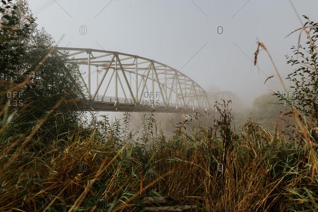 View of a bridge through riverside shrubs