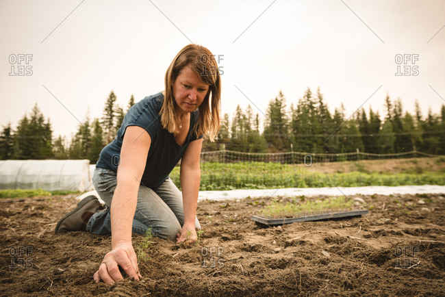 Female farmer planting small plant in the soil at field