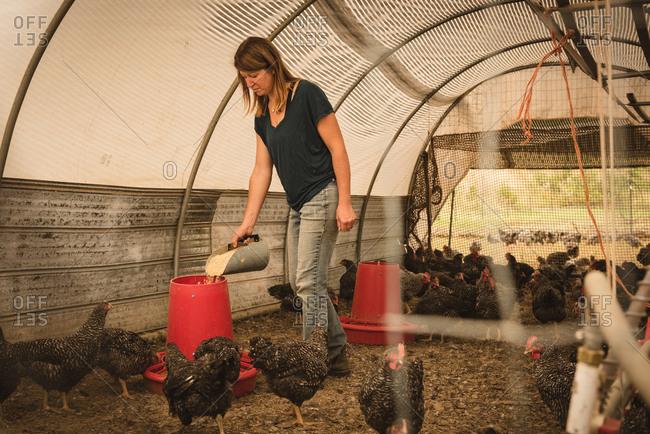 Female farmer feeding the hens in henhouse