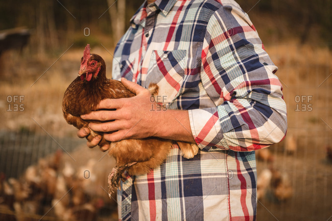 Mid section of farmer holding hen in farm