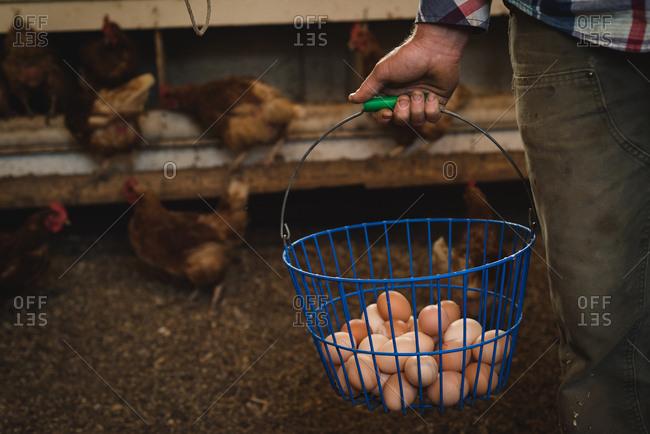 Farmer holding bucket of eggs in farm