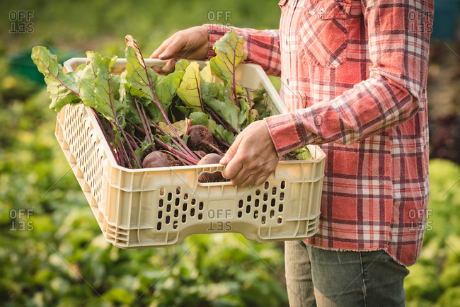 Mid-section of farmer holding crate full of root vegetables in field