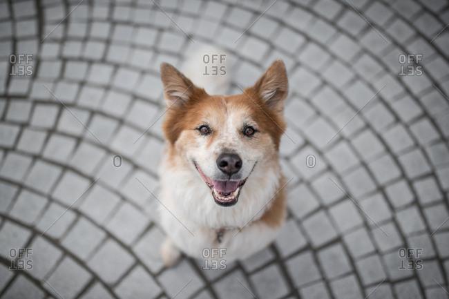 Dog stands on bricks