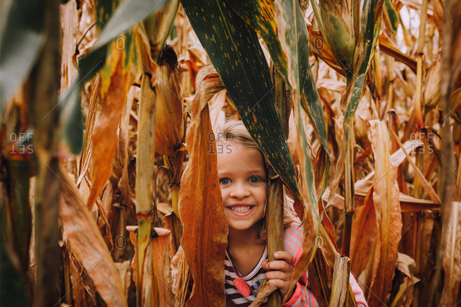 Toddler hiding in cornstalks