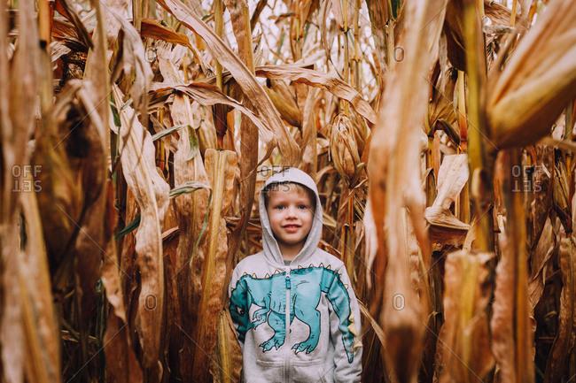 Little boy standing in cornfield