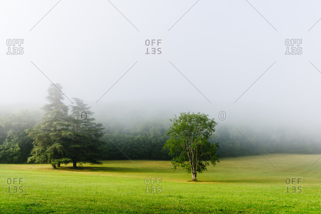 Green field with trees in Lacave above the Dordogne river