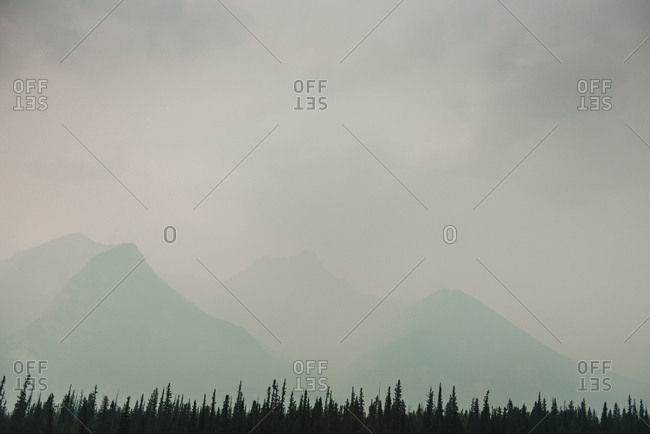 Forest and misty mountains in Jasper National Park, Alberta