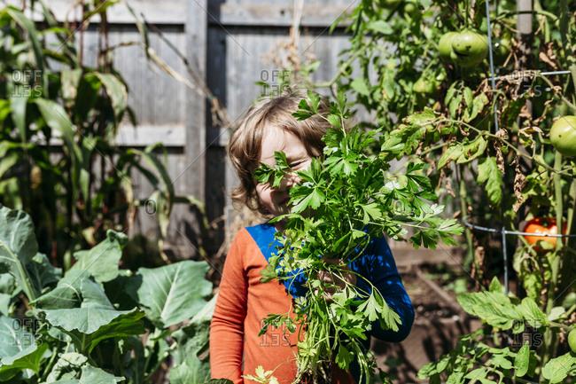 Child hiding behind tomato plant