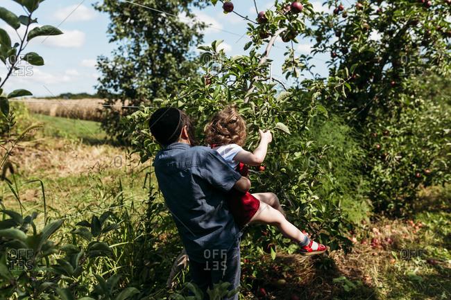Boy helping girl pick apples
