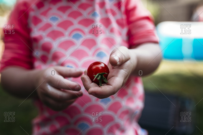 Child holding a ripe tomato