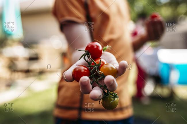 Boy holding vine tomatoes