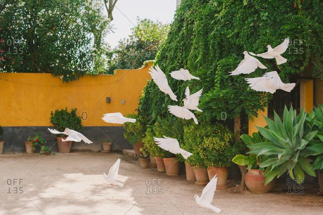 Flock of doves at wine estate wedding