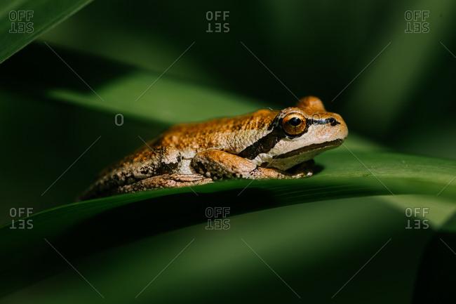 Frog rests on green leaf