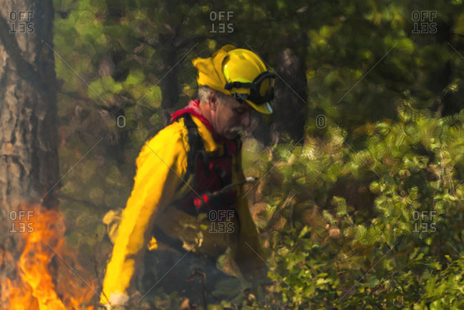 September 19, 2007: Nature Conservancy steward, Wink Lees walking the fire line during one of the first prescribed burns in the Ossipee Pine Barrens.