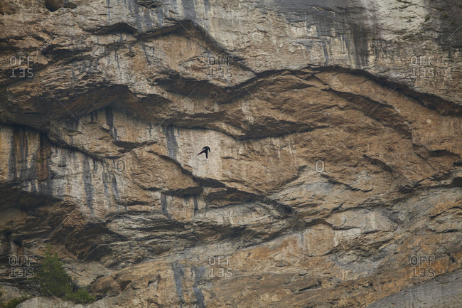 July 14, 2013: An unidentified base jumper subtly visible on a huge rock face.  Lauterbrunnen, Switzerland.