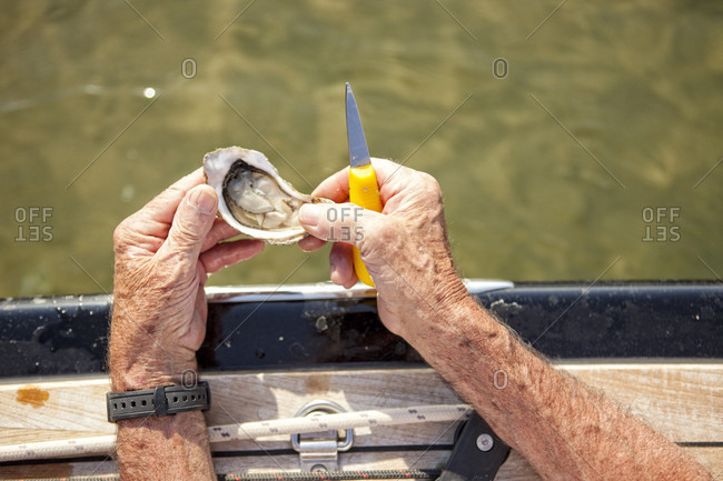 Man opening oyster onboard sailboat, Banc d'Arguin, Arcachon Bay, France