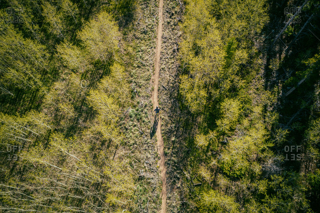 Man riding mountain bike on trail through woods