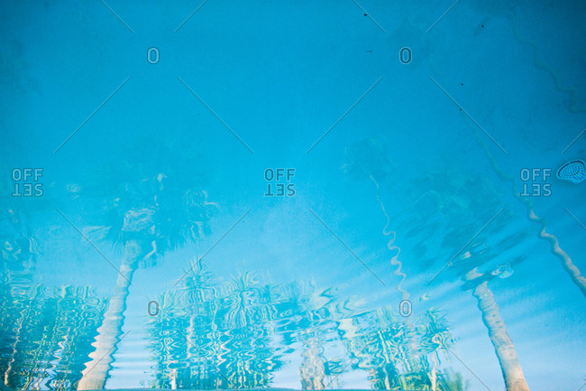 Reflection of palm trees and blue sky in a pool of water