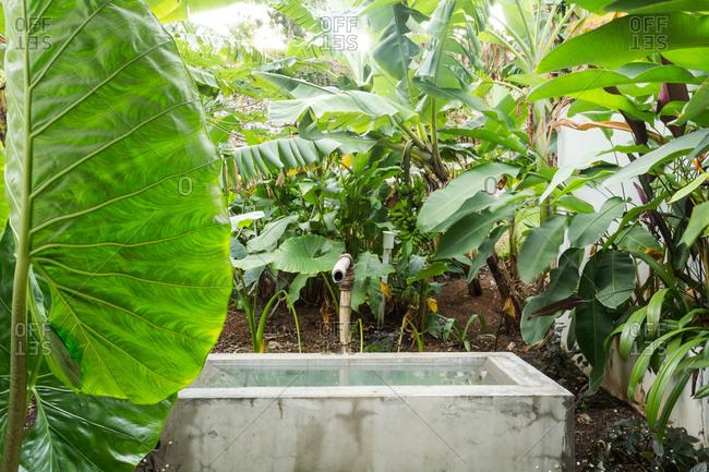 Rustic water basin in lush back yard