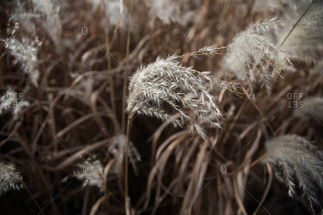 Detail of wild plants blowing in the wind
