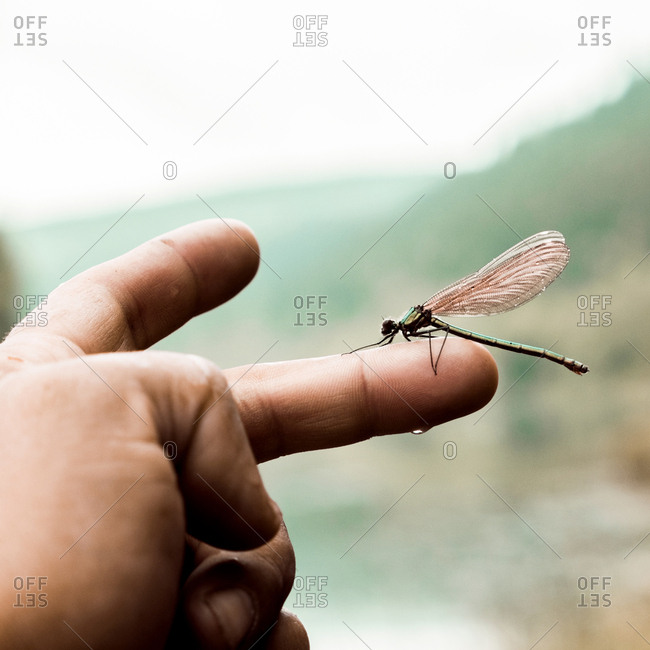 Close-up of dragonfly perching on boy's finger