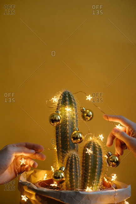 Hands decorating cactus with Christmas lights
