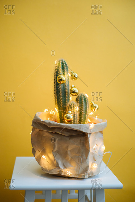 Cactus decorated with Christmas bulbs and lights