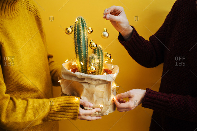 Two people decorating a Christmas cactus
