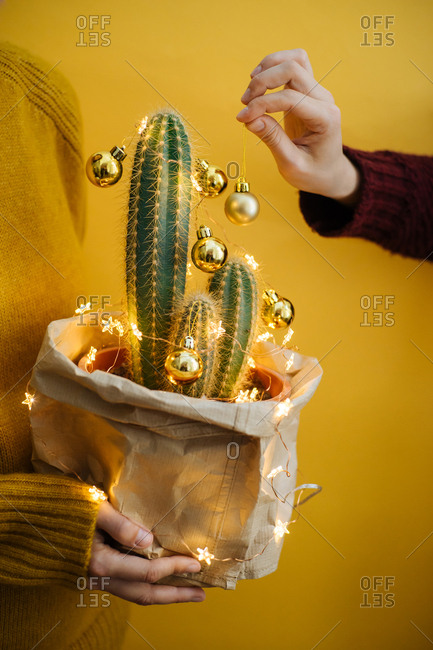 Person hanging bulbs on a Christmas cactus