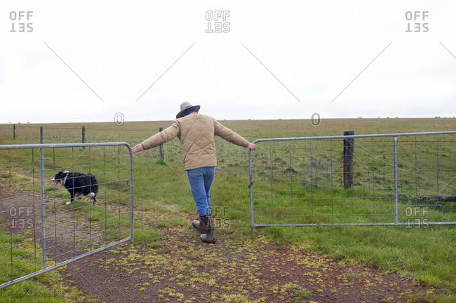 A sheep farmer opening gate in Penshurst, Australia