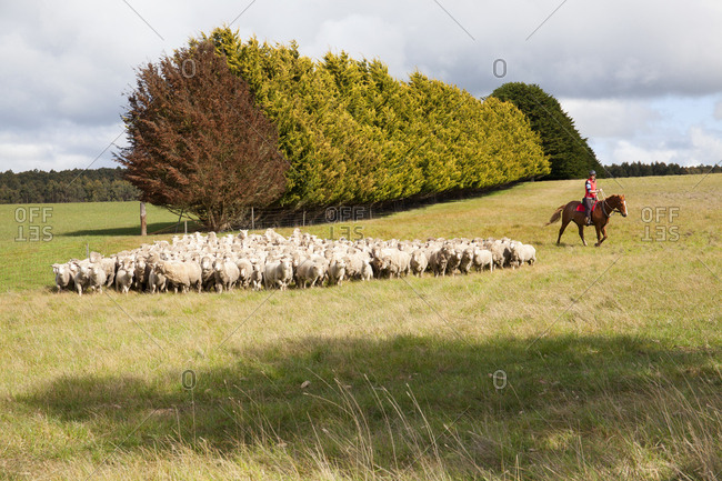 Female sheep farmer on horse in Penshurst, Australia
