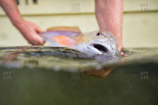 Man releasing small redfish