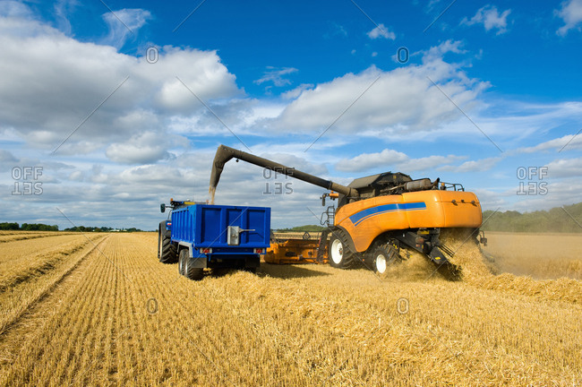 Combine harvester and tractor, harvesting wheat