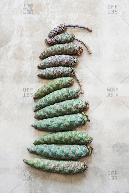 Pine cones arranged in row